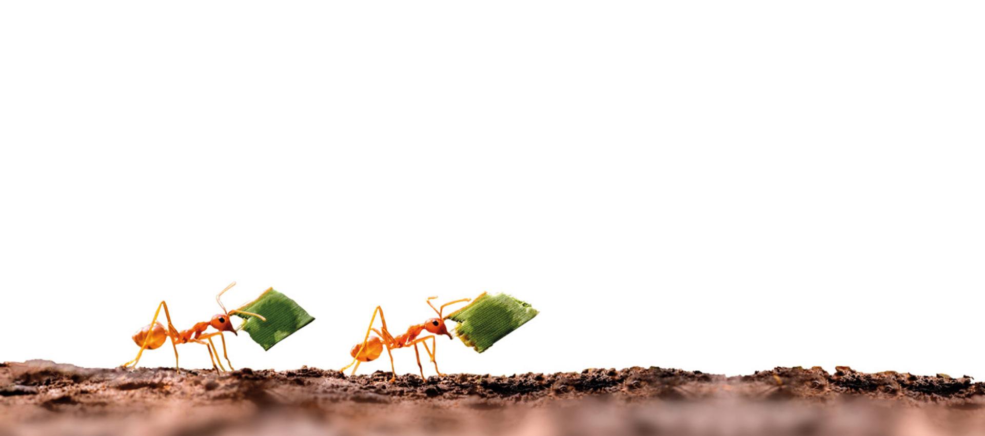 mieren HR