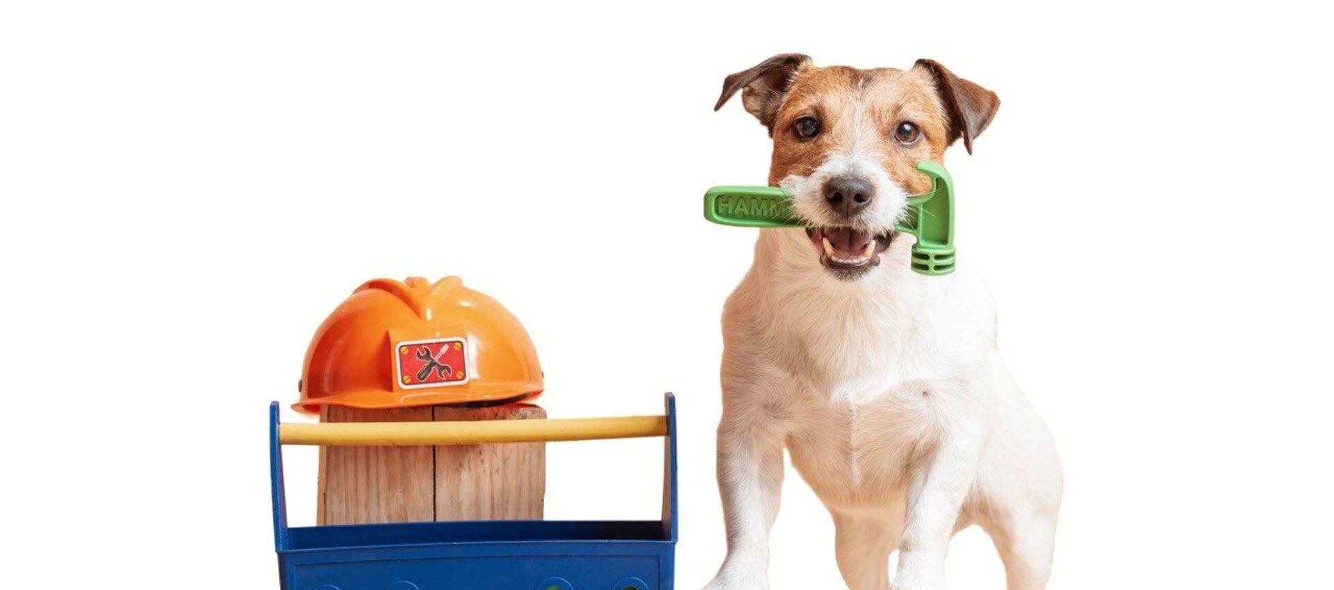puppy junior monteur